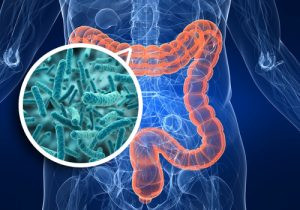 Intestin, microbiote et rhumatismes