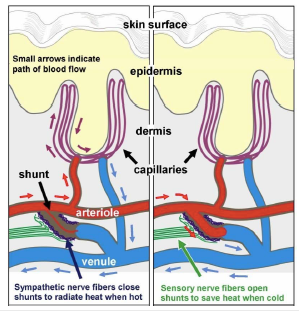 Le mystère de la fibromyalgie