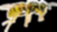 wasp_PNG30.png