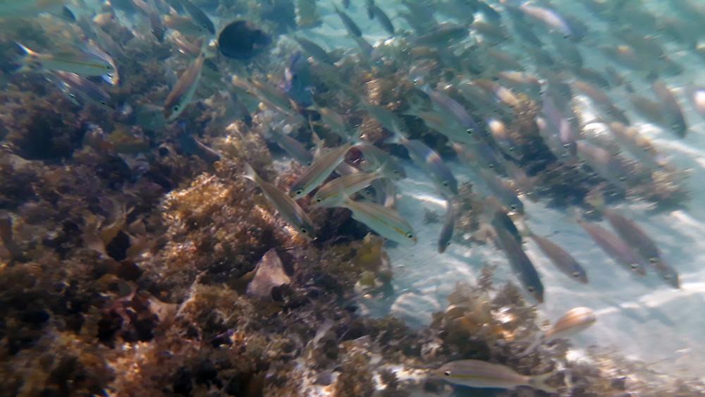 Peixes - Recife de fora