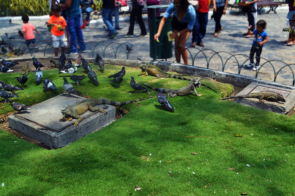 Parque com Iguanas