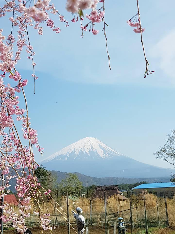Monte Fuji.