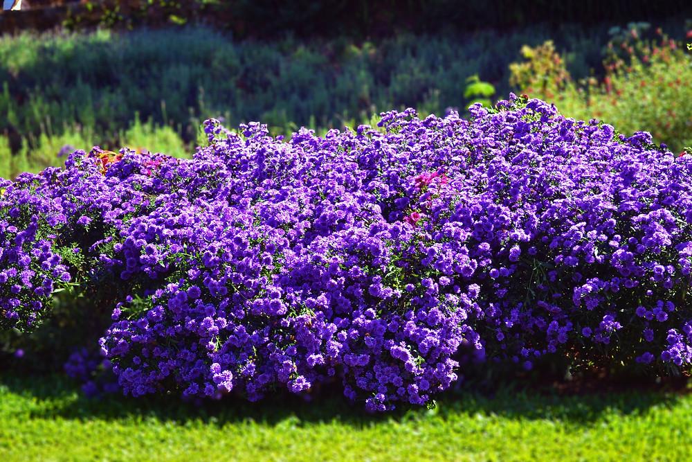 Flores - Le Jadin