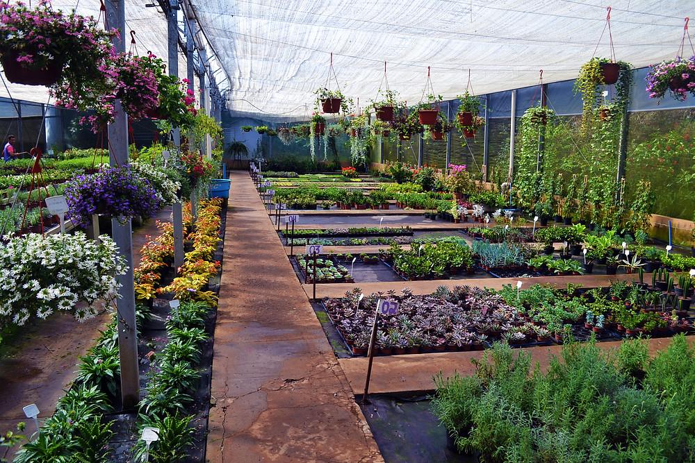 Estufa com flores e plantas ornamentais