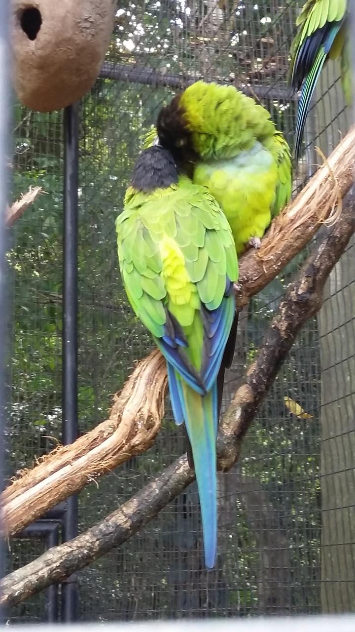 Papagaio no Parque das Aves
