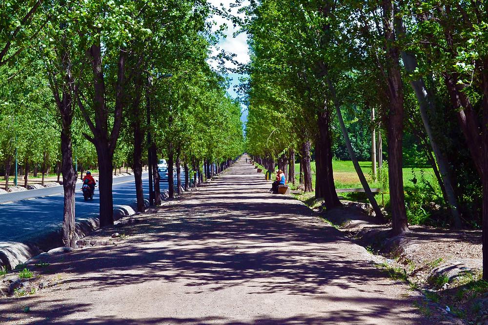 Rua de Mendoza árvore dos 2 lados