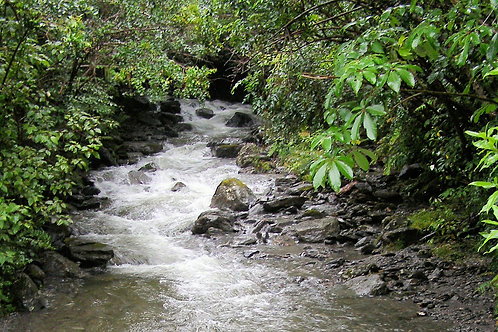 South Island Stream photo