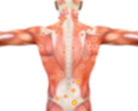 Muskeln Sensoren