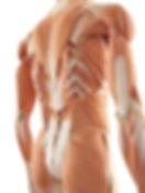 Rücken Muskeln dritte Schicht