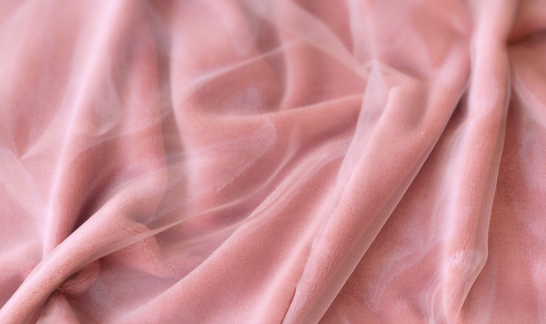 Pink Velvet b.JPG