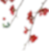 bloem4.png