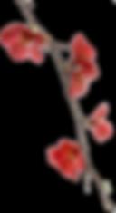 bloem4_edited.png