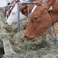 Feeding Hay with Agreto