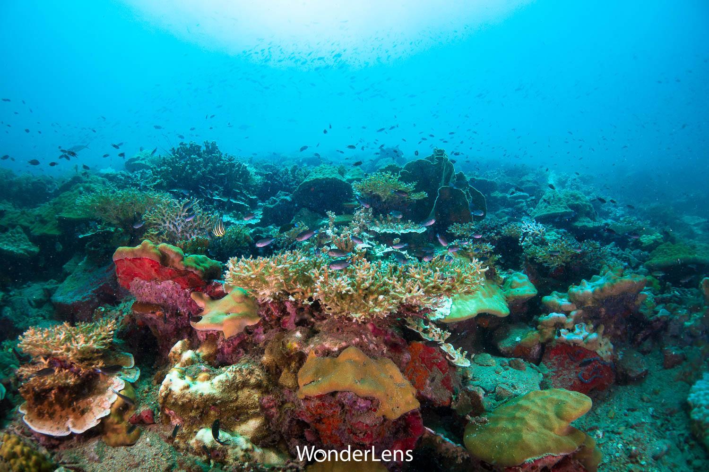 ปะการังหลากหลายชนิดที่เกาะสันฉลาม