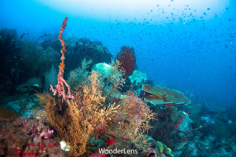ปะการังหลากหลายชนิด ทั้งฟองน้ำครก และกัลปังหา สามารถพบได้ที่เกาะสันฉลาม