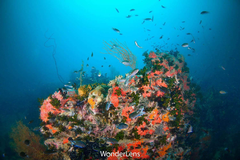 สีสันของโลกใต้น้ำที่เกาะสันฉลาม