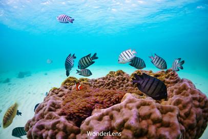 กอดอกไม้ทะเล และปลาการ์ตูนส้มขาว ที่เกาะจวง