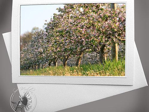 Apple Blossom Row
