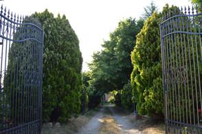 Un-viale-di-Villa-Velia.