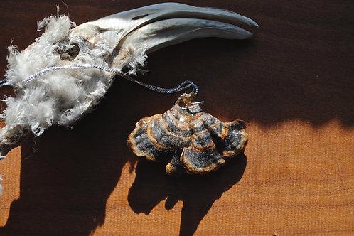 Turkey Tail Mushroom Pendant on Sterling Silver Chain