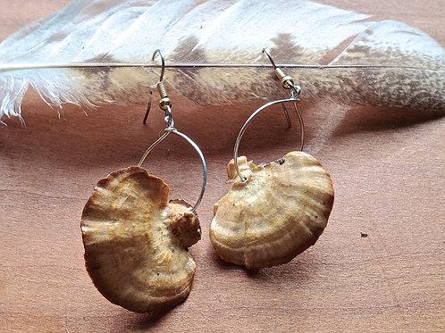 Tan Turkey Tail Mushroom Earrings