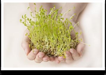 Klíčky – čerstvá zelenina po celý rok