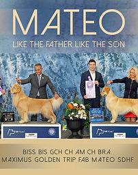 Breeder | Maximus Golden | Florida