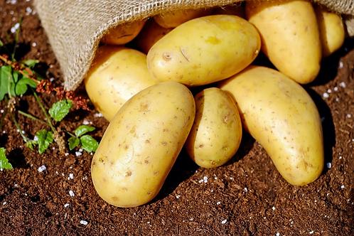Pommes de terre Agatha kg Primeur M.Szymanski