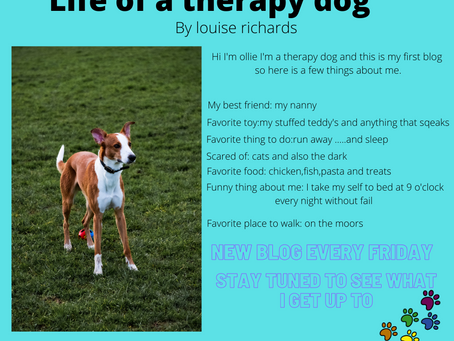 Life of a therapy dog