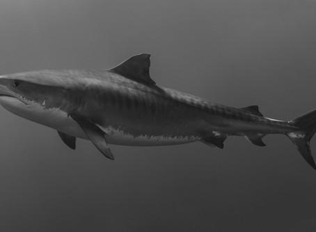 I'm terrified of sharks. Can I go spearfishing?