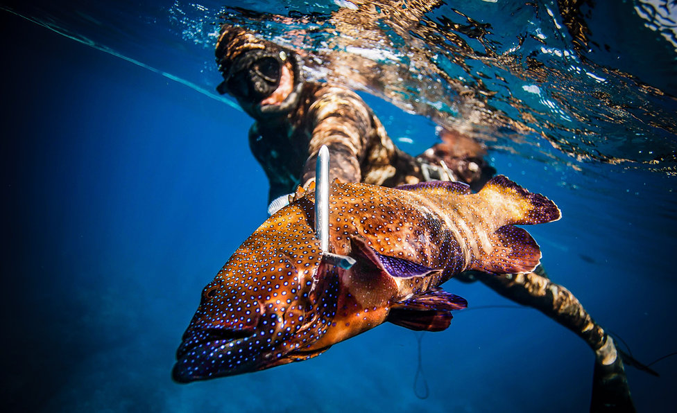 Spearfishing invasive fish in Hawaii