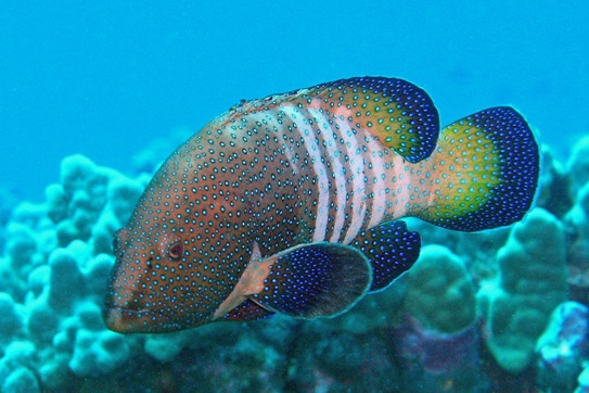 Hawaii invasive species and target fish top shot for Edible hawaiian fish