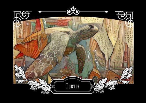 turtle front.jpg