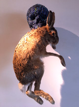 Skull with Hare