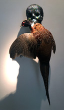 Skull with Pheasant