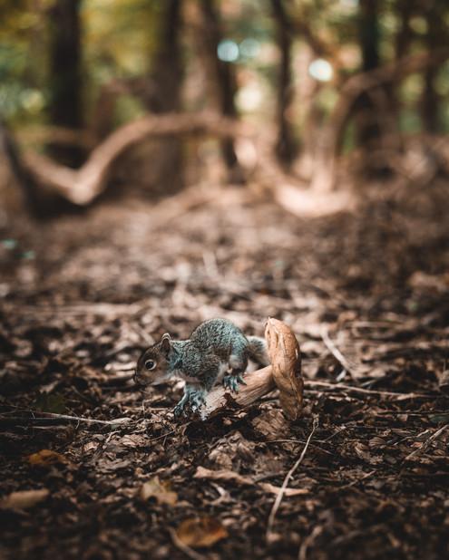Mad Squirrel-45.jpg