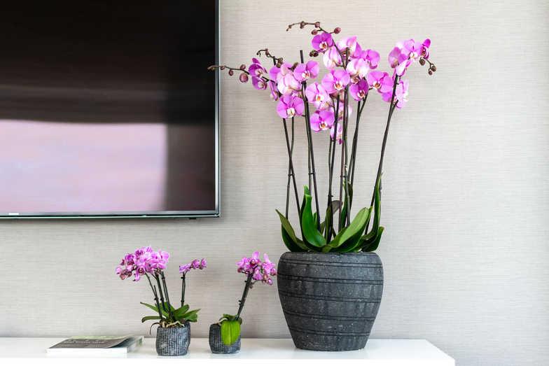portico flowers (1 of 1)-13.jpg
