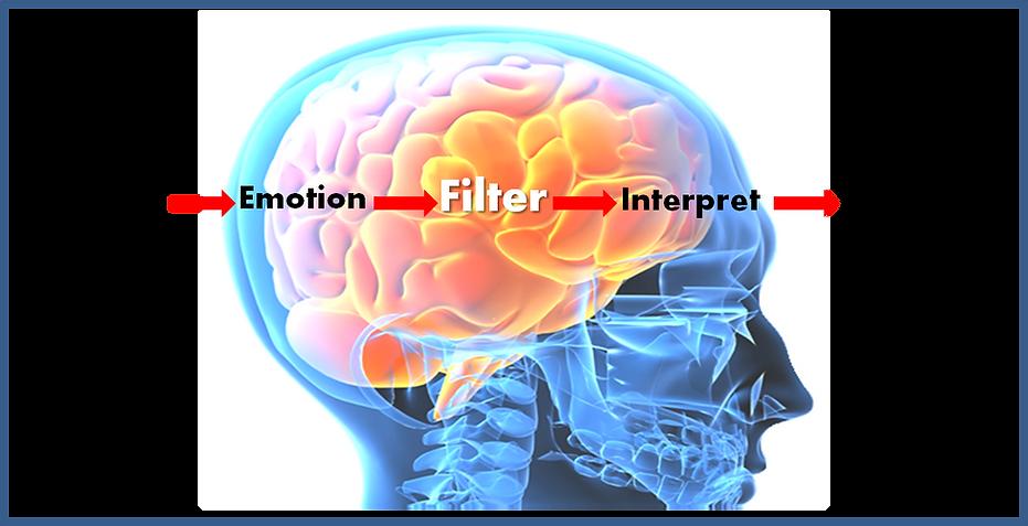 brain-filter.png