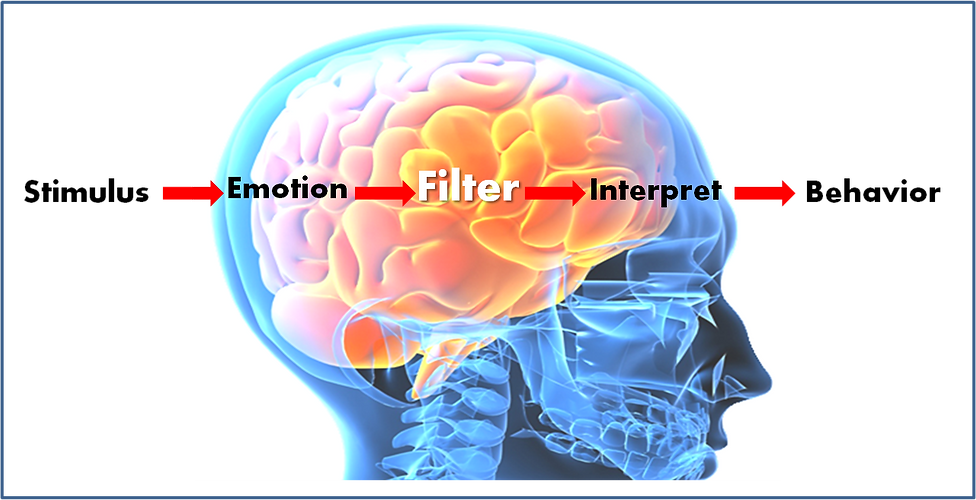 brain-filter.png