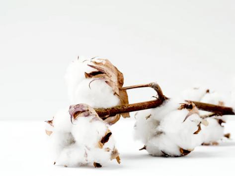Regenerative Organic Agriculture in Cotton