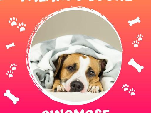 Você sabe o que é Cinomose? Conheça os riscos para seu Pet