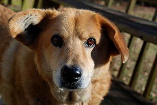 Leishmaniose canina: Sacrificar não é a solução!