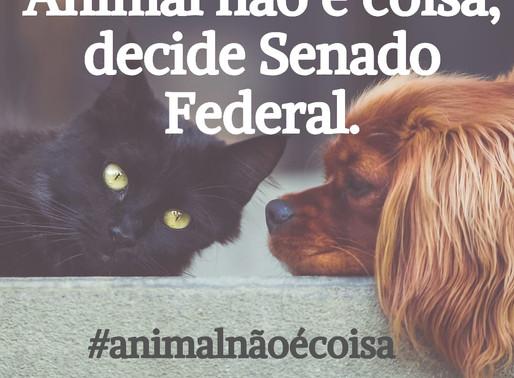 Animal não é coisa, decide Senado Federal