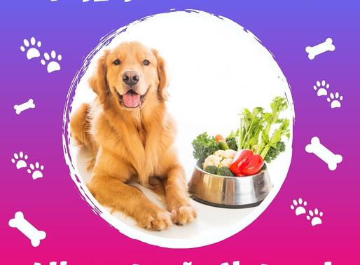 Você sabe o que é alimentação natural para os Pets?