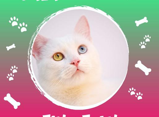 Já ouviu falar de FIV e FeLV? São dois vírus perigosos para os gatos, leiam, é muito importante.