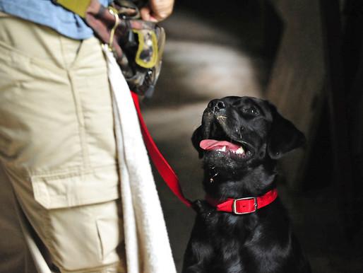 Benefícios do adestramento para seu Pet