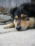 Castração de cães e gatos é uma das formas para reduzir o abandono de animais.