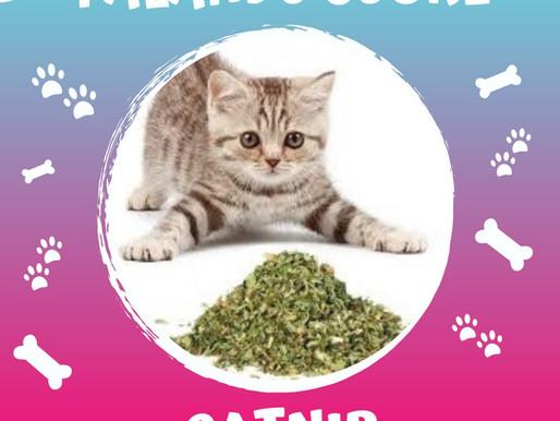 Catnip - Erva de Gato