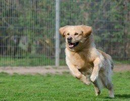 Pessoas que possuem cães fazem mais atividades físicas do que as que não tem