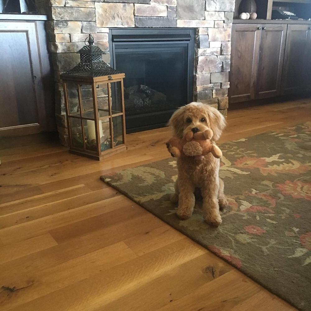 Are Mini Goldendoodles Smart